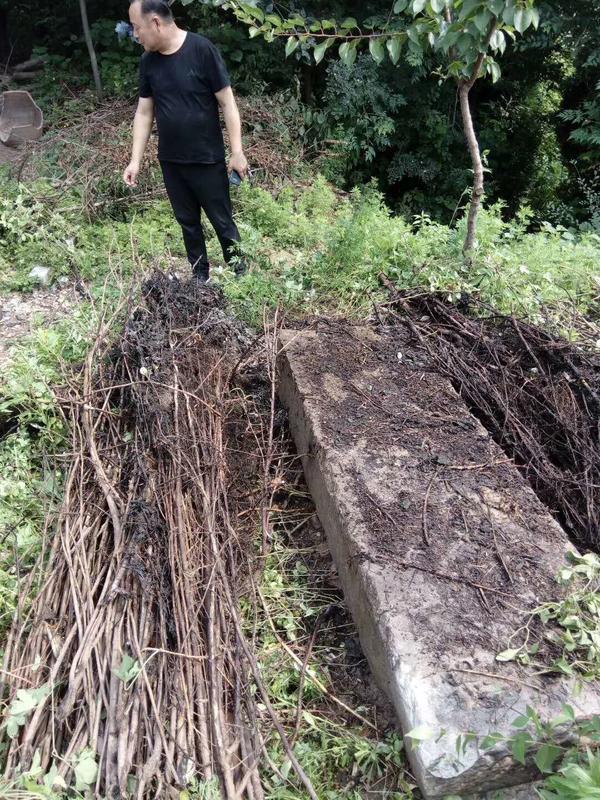 77年前豫南会战1068位烈士墓碑疑似重现于世