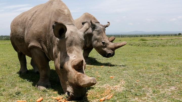 大型动物快灭绝了,人类成为自然界超级捕食者