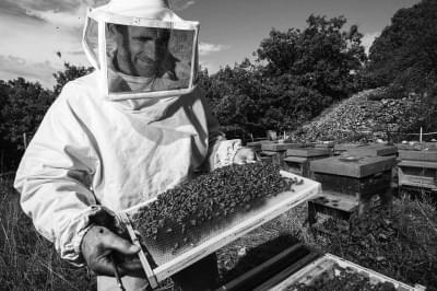 蜂蜜和俄罗斯的不解之缘
