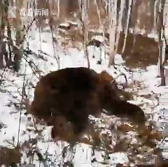 16岁哥哥为救弟弟将熊引开 惨死熊口被肢解掩埋