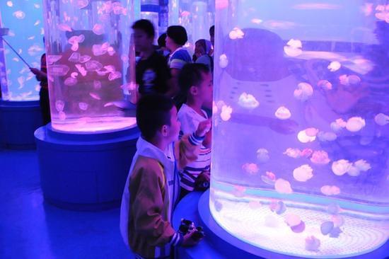 8月18日,参观者在石林冰雪海洋世界观看水母.图片