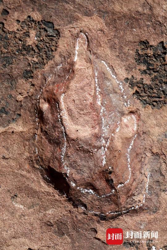 """""""侏罗纪猜想""""证实!首例群体驰龙类恐龙足迹被发现"""