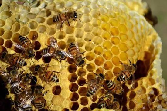 还有许多其他的恋人都是非常优秀的建筑师~动物的巢可不是用一根蜜蜂男对狮子图片