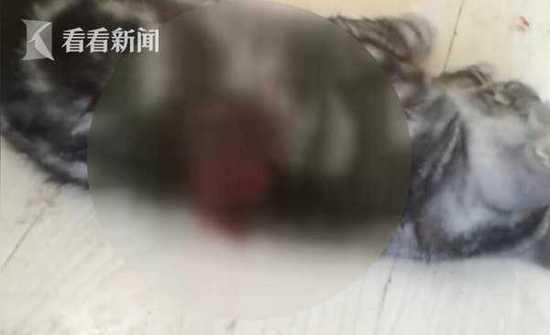 男子不满分手求复合 自拍残忍虐猫视频威胁女友