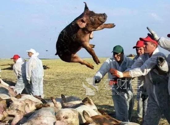 猪周期遇上猪瘟 中欧基金双汇发展亏损超过10%