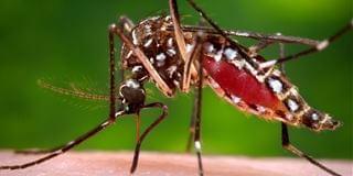 科学家研究用无人机释放绝育蚊子,控制蚊子繁殖