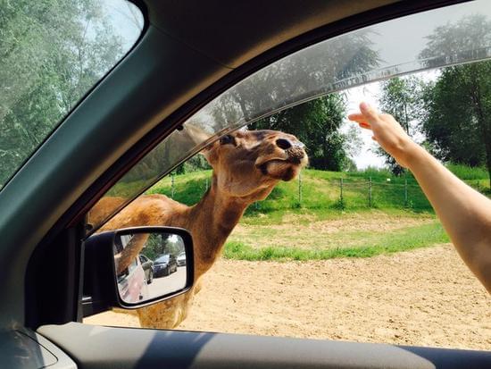 八达岭、大兴、长隆 野生动物园游览体验