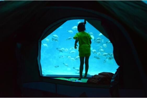 和海洋动物一起入眠,南昌万达海洋乐园创亲子梦幻空间