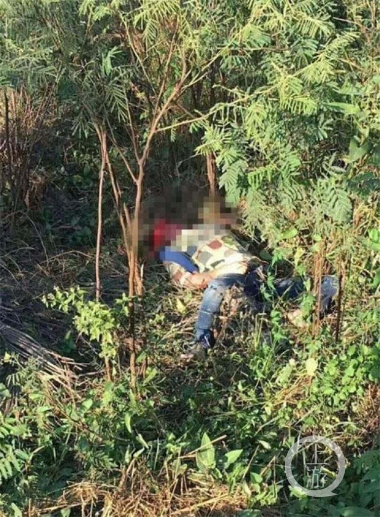 救游客被大象踩死 游客不听劝告拉大象尾巴导致悲剧发生
