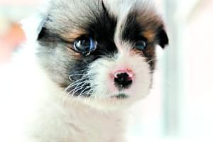 """中华田园犬是""""祖先留给我们的最好的狗""""吗"""