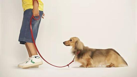 各地陆续出台最严养狗办法:遛狗不栓绳 没收捕杀