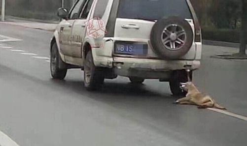 """黄狗被绑车后拖行 黄石男子虐狗遭网友""""通缉""""求原谅的照片 - 1"""