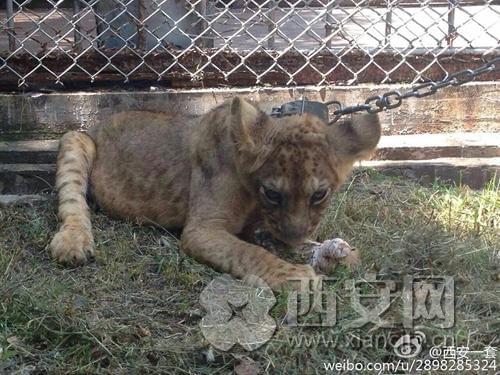 进入西安秦岭野生动物园