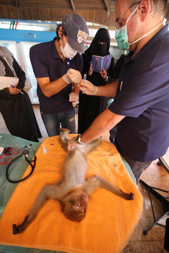 """图为""""四爪""""工作人员为动物进行体检和麻醉"""