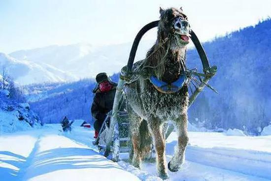 冬季必须去一次的童话世界——喀纳斯