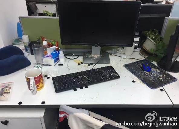 黄鼠狼溜进办公室怒拆键盘:竟因里面的面包屑的照片 - 1