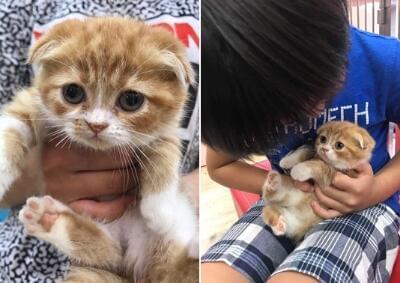 林志颖送Kimi折耳猫当生日礼物 遭网友炮轰