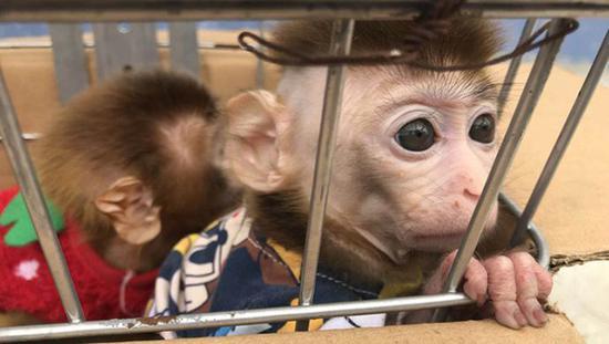 夫妻抓猕猴当宠物被公诉:涉非法捕濒危野生动物罪
