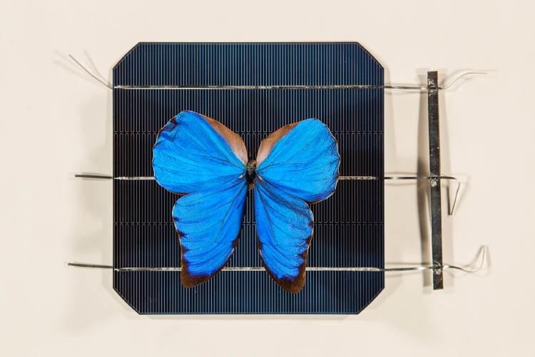 科学家受蝴蝶启发研发精准控光术 可应用于隐身技术等领域