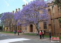 限流还是扩招?澳洲大学招国际留学生现分歧