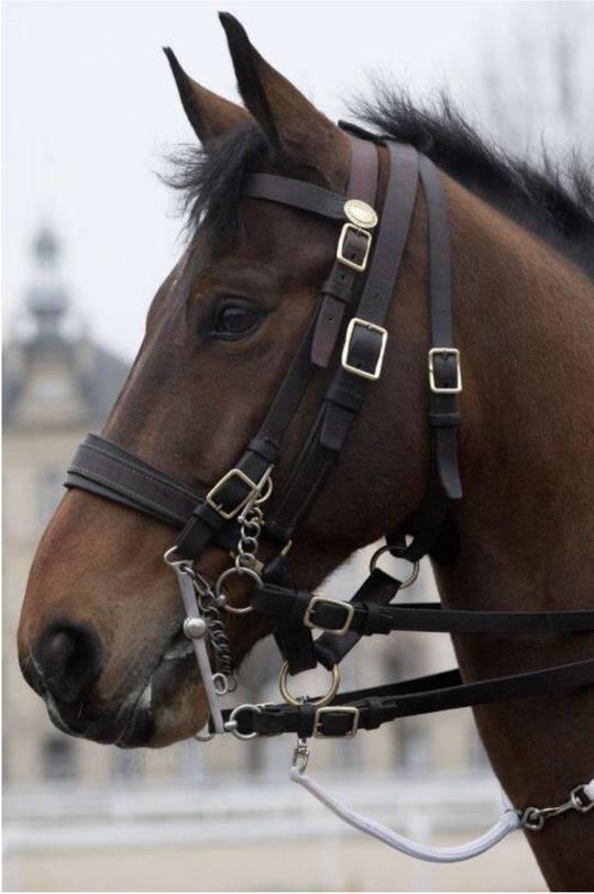 马克龙送的国礼马来头不小 服役于欧洲最强骑兵队