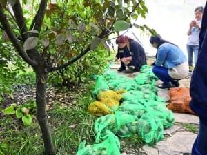 社会人士北大放生巴西龟 专家:入侵物种破坏生态