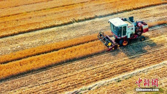 下调小麦最低收购价会否影响农民收益?发改委回应