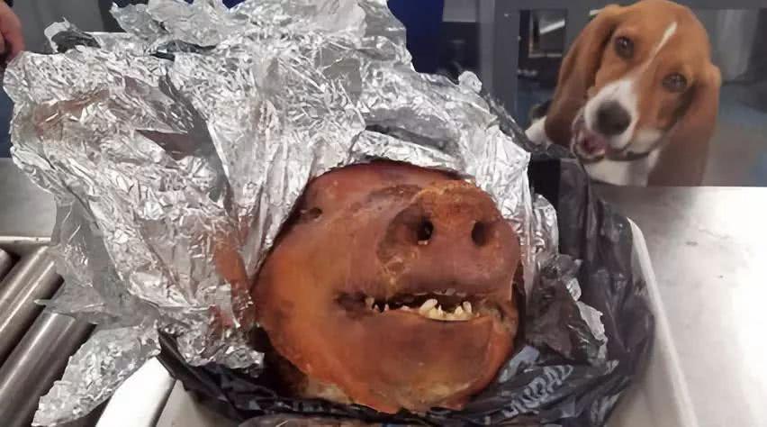 猪头哭的图片可爱