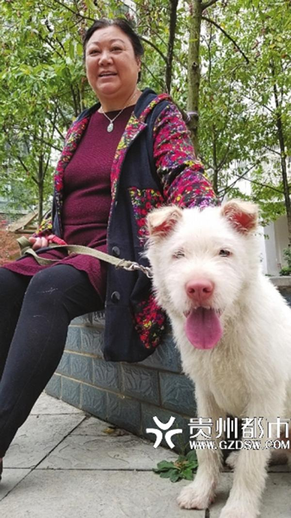 被主人送到200公里外寄养 这条狗用5个月找了回来