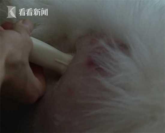 男子虐打宠物狗遭爱狗人士堵门 自称凭什么解释