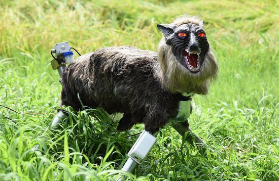 长得太像妖怪,日本农场用上机器狼驱赶鹿和野猪
