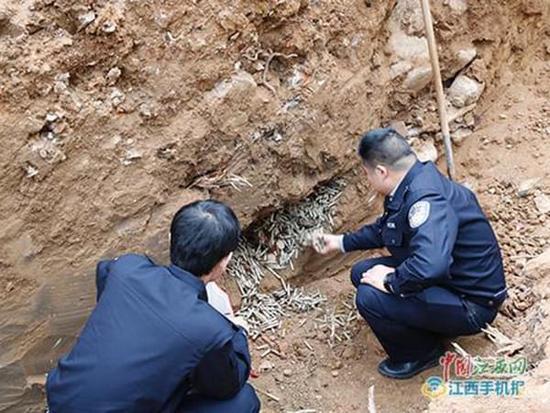 江西挖出4万发子弹75枚手榴弹 疑国民党军队遗留
