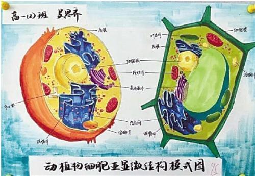 作者的名字是不是很眼熟?没错,正是今年杭州市中考最高分的获得者吴思齐同学
