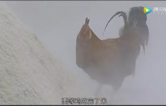 轻松一刻:为啥转锦鲤没用,因为过了7秒它忘了