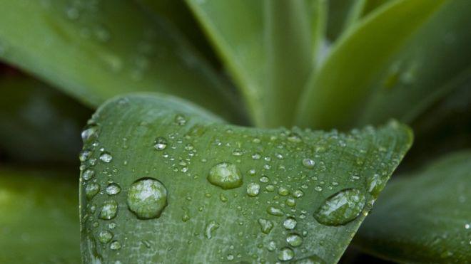 香水师都痴迷的气味:雨后空气为什么这么好闻 ?