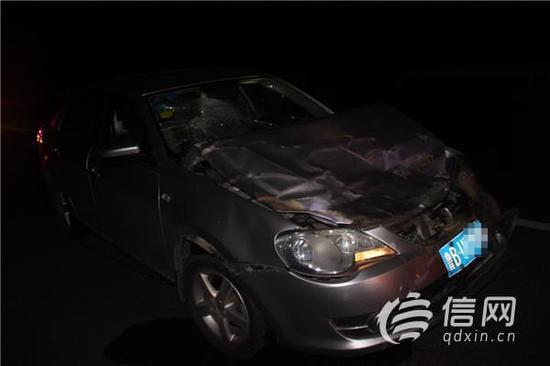 青岛高速发生离奇车祸 肇事者竟是一头鹿