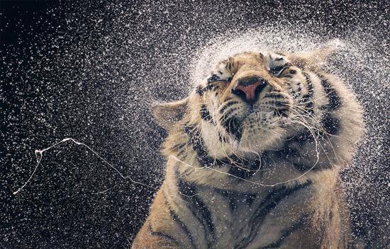 『摄影师』Tim Flach:唤起怜悯之心 充满人性的动物肖像