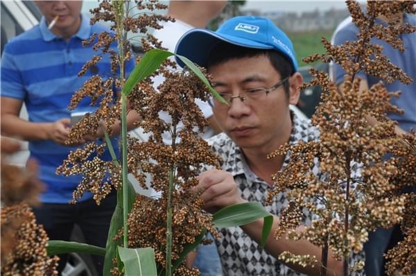 雷力集团海洋生物技术:助力国酒糯高粱种植亩产超千斤