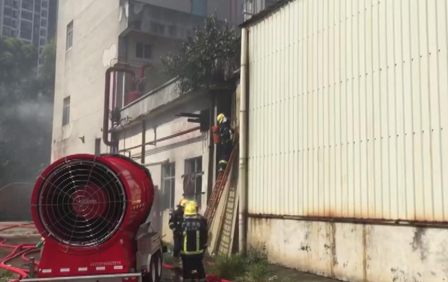 广东湛江一冷冻厂发生大火 暂无人员伤亡报告