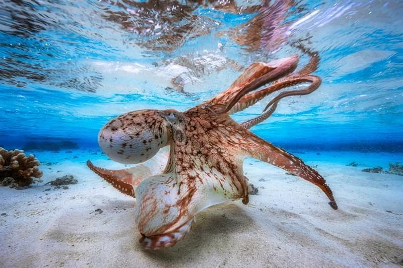2017水下摄影大赛冠军作品欣赏