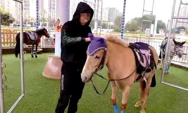 商场用电机驱使真马旋转4小时 运营方:马需要锻炼