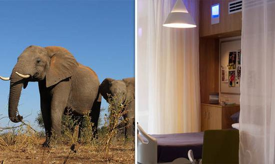癌症研究获得新突破:人类与大象共享抗癌基因!