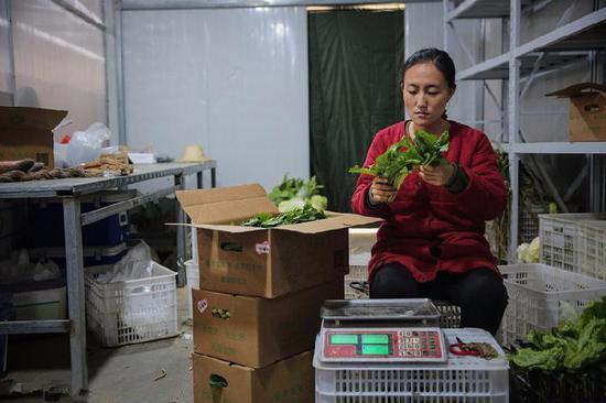 海归女博士回京种菜养猪 年收入800万