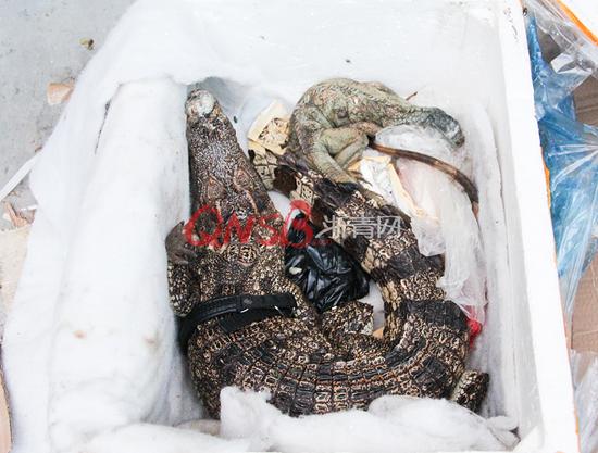 女子网购保健品拆开竟是死鳄鱼和蜥蜴 有腐烂气味
