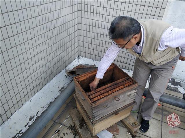 蜂疗师小区内养千只蜜蜂 致邻居担惊受怕或搬离
