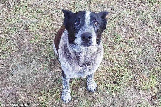 3岁女孩迷失丛林 17岁老忠犬陪伴整夜并带人找到她