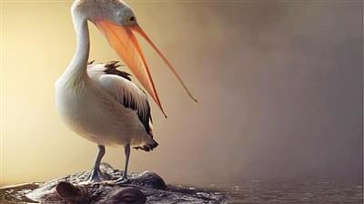 最新研究发现鸟类在进化过程丢失牙齿原因
