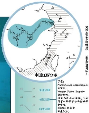 长江江豚升格为独立物种 濒危程度比大熊猫严重