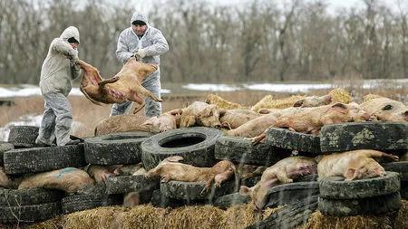 媒体:非洲猪瘟来袭 猪肉还能吃吗?
