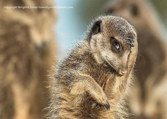 2016搞笑野生动物摄影大赛